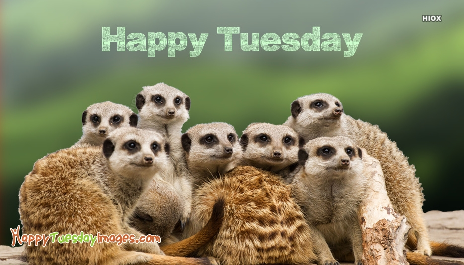 Happy Tuesday Animals Pics