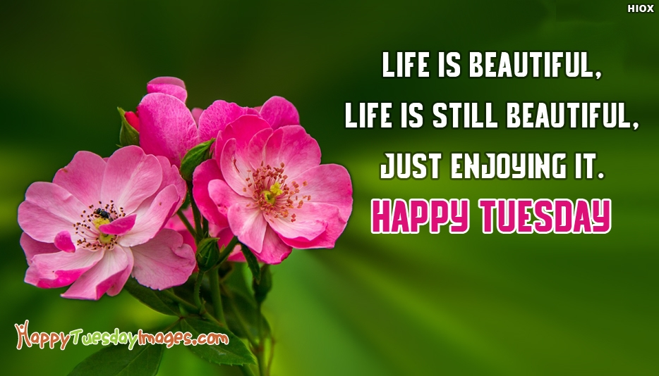Happy Tuesday Greetings - Life is Beautiful, Life is still Beautiful, Just Enjoying it. Happy Tuesday