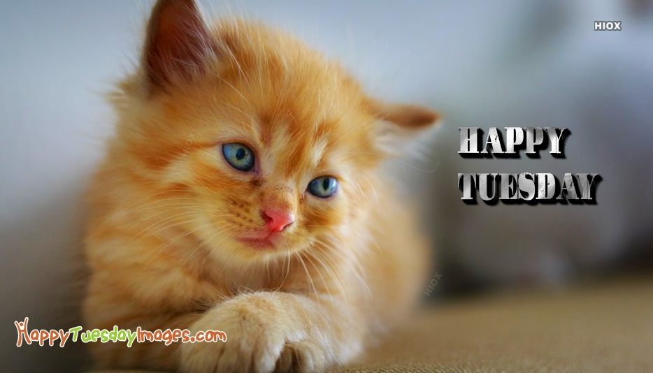 Happy Tuesday Cat Images