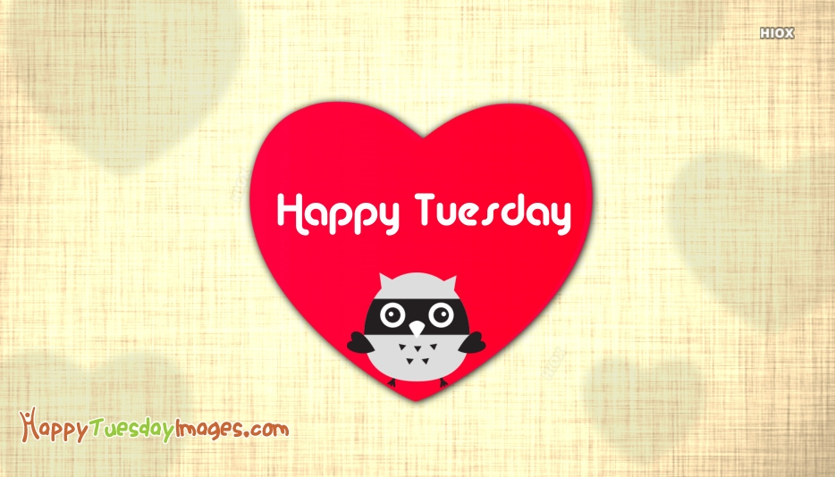 Happy Tuesday Owl Images