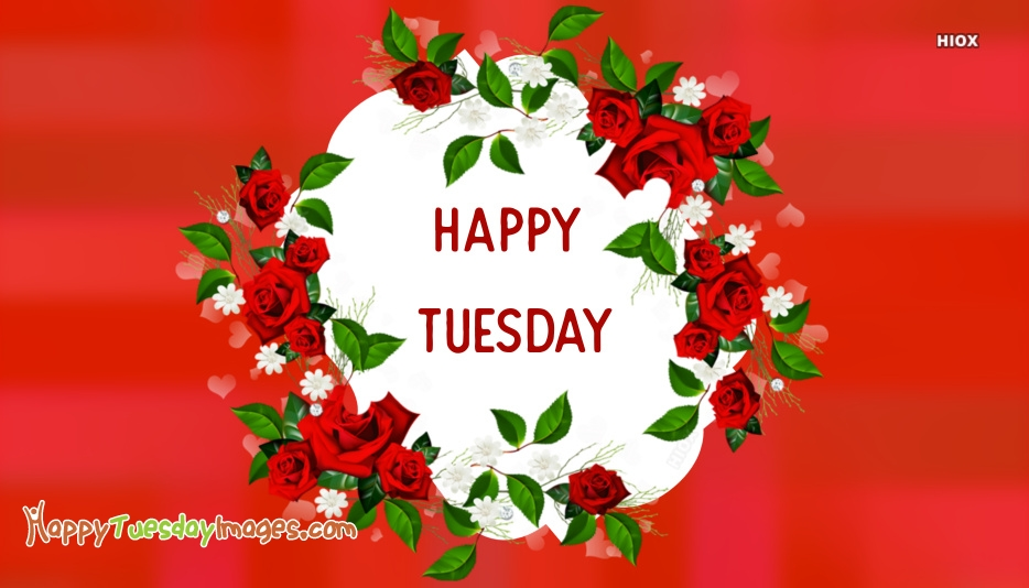 Happy Tuesday Roses