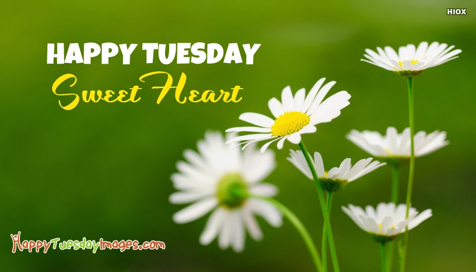 Happy Tuesday Sweetheart - Happy Tuesday Images For SweetHeart