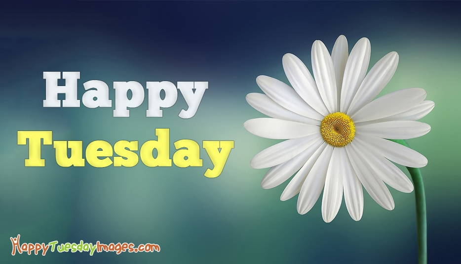 Good morning tuesday Happy Tuesday Wallpaper