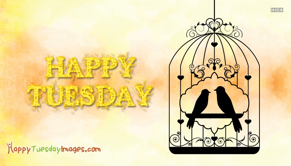 Happy Tuesday Birds Images