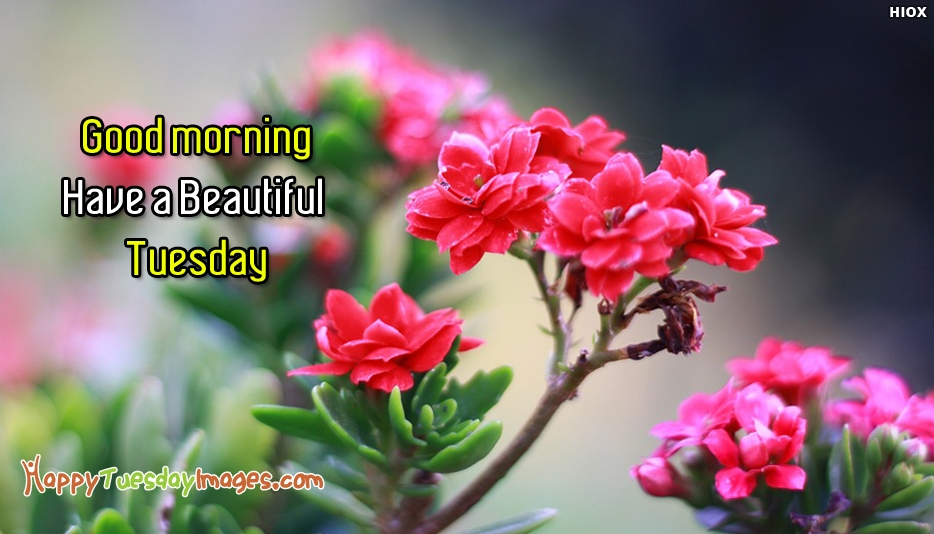 Have A Beautiful Tuesday. Good Morning - Happy Tuesday Images for Good Morning