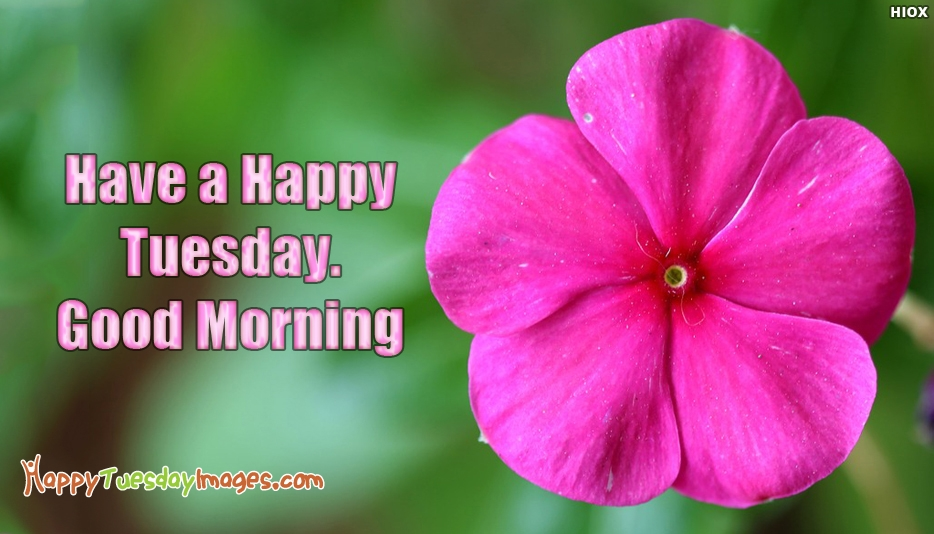 Have A Happy Tuesday Good Morning - Happy Tuesday Images for Good Morning
