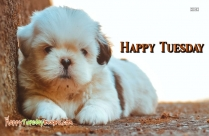 Happy Tuesday Dog Images