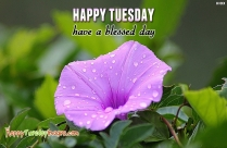 Happy Tuesday! Have A Great Day