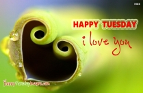 Happy Tuesday With I Love You