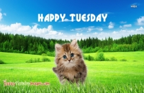 Happy Tuesday Kitty Images