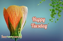 Best Wishes For A Wonderful Tuesday