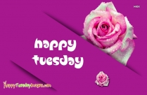 Happy Tuesday Pink