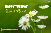 Happy Tuesday Sweetheart