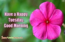 Happy Tuesday Have A Blessed Day