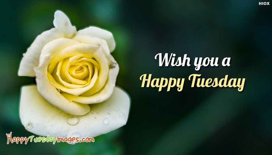 Wish You A Happy Tuesday - Happy Tuesday Images
