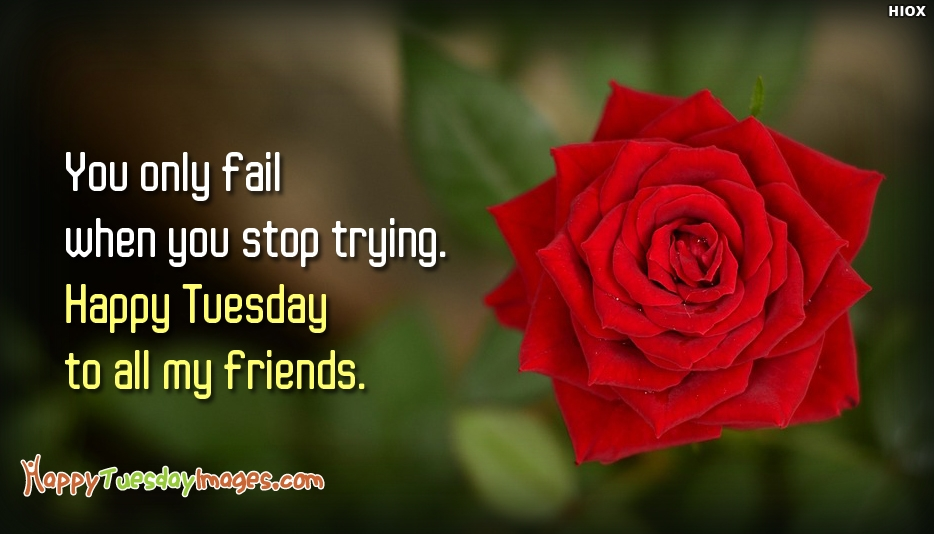 You Only Fail When You Stop Trying. Happy Tuesday To All My Friends - Happy Tuesday Images for Friends